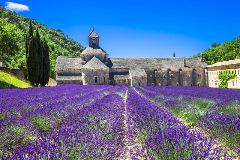 Lavendelblüte Mitte Juni bis Juli | PRO10100