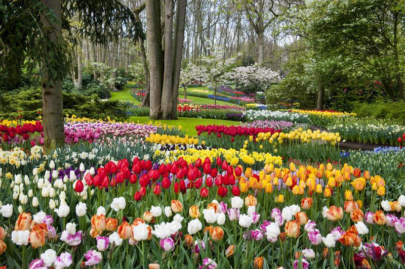 Tulpen in Blumenpark Keukenhof | AMS15310