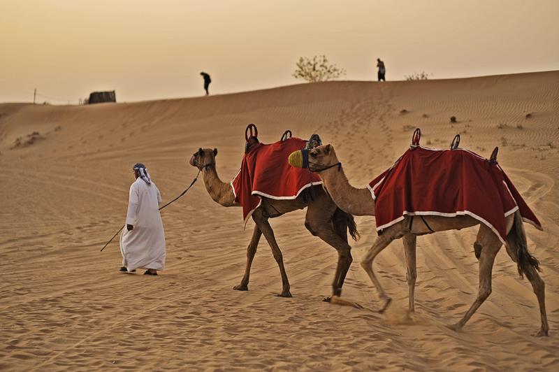 Dubai | DXB10800