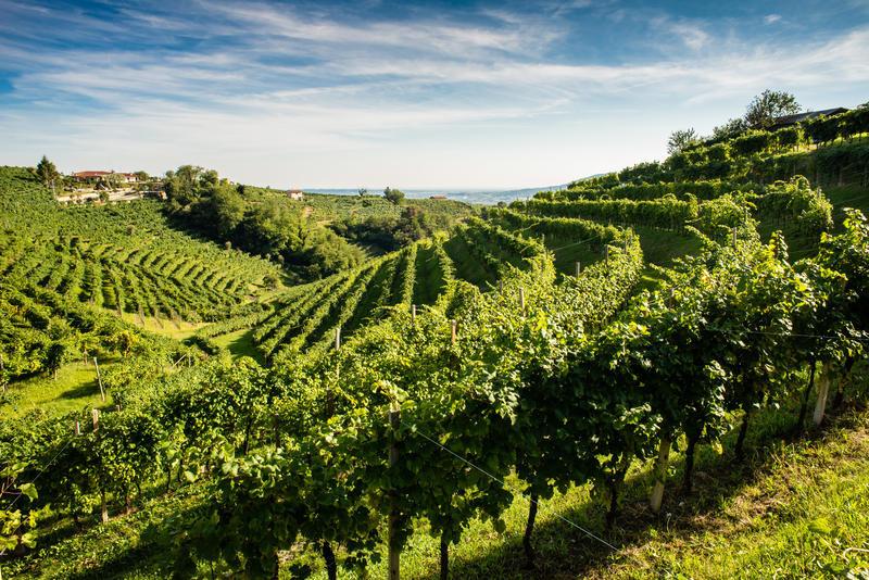 Conegliano e Valdobbiaden | ITA12900